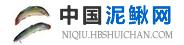 中国泥鳅网