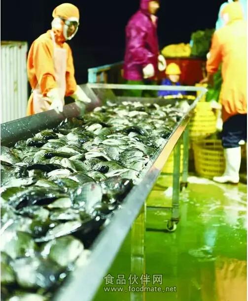 罗非鱼片加工制作全过程