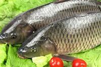 草鱼每日价格播报