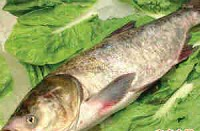 鲢鱼每日价格播报