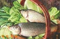 鲤鱼每日价格播报