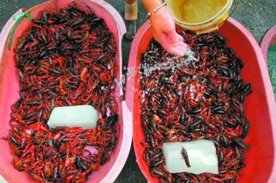 上海禁止使用洗虾粉