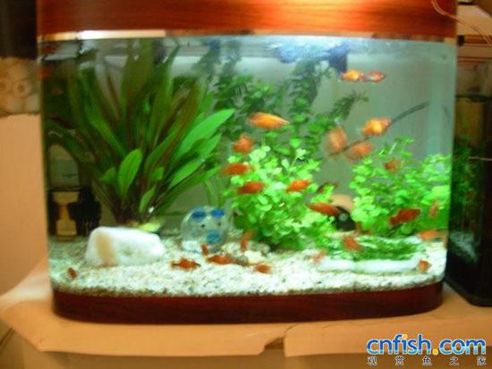 如何自制鱼缸灯_DIY自制观赏鱼缸灯_水族器材_湖北水产网