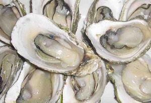 海蛎每日价格播报
