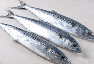 鲅鱼每日价格播报