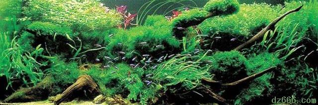 沉木造景水草缸 四