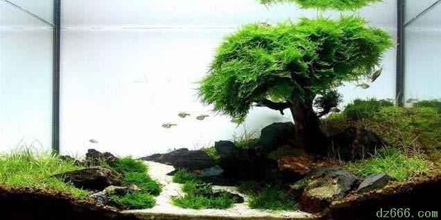 沉木造景水草缸 一