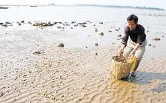 滩涂文蛤养殖大批死亡原因及预防措施