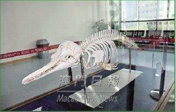 澳门科技大学获赠珍贵中华白海豚标本