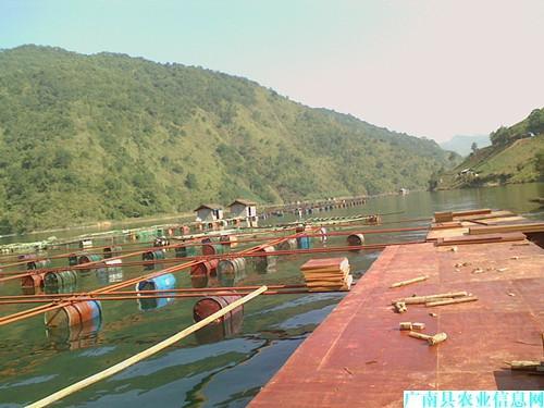 云南广南罗非鱼出口创汇基地建设项目进度快质量高