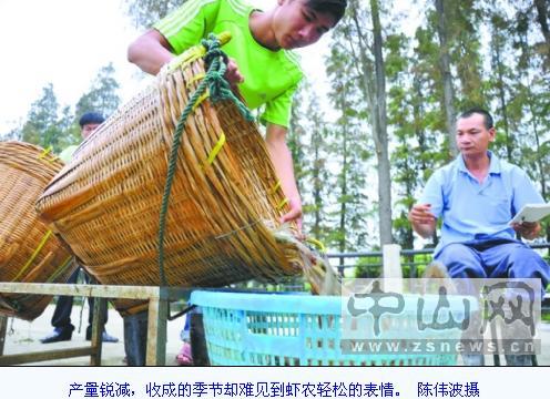 广东省中山市罗氏虾濒临灭绝 大幅度退化减产