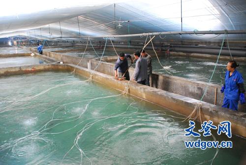 海南泽库镇大力发展千赢电子游戏平台养殖业