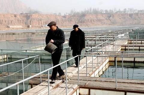 青海黄河谷地百万亩土地整改打造沿河鱼米之乡