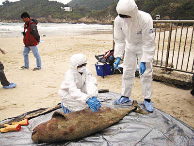 香港沙滩再现江豚搁浅 今年已有8宗死因成谜