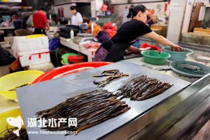 农历六月黄鳝赛人参:苏州市场黄鳝价格略有上涨