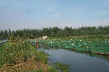 黄鳝网箱养殖技术要点之前期准备工作
