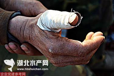 湖北鄂城区长港镇鱼塘被征调查:我的鱼塘谁做主