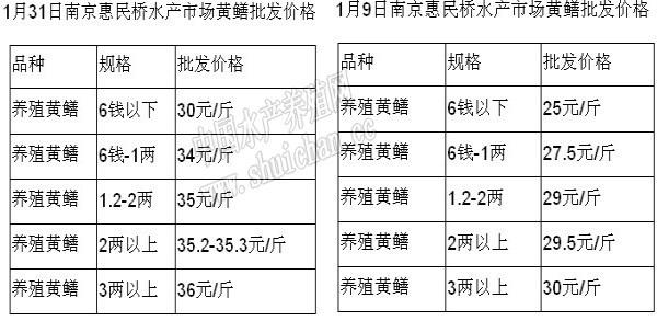 春节期间南京市场黄鳝供求略显失衡 批发价格涨幅明显