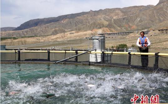 青海化隆建成黄河上游最大规模三文鱼Beplay官网版场