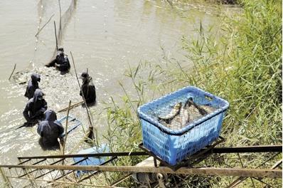宁夏银川市贺兰县精品鱼畅游大西北