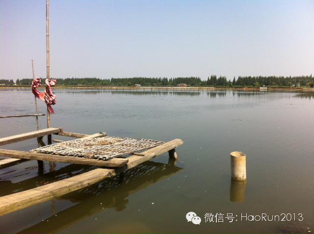 2014年南京高淳地区河蟹养殖情况简析