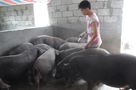 贵州荔波退伍军人赵军华创办大型养殖场为近千农民提供就业岗位