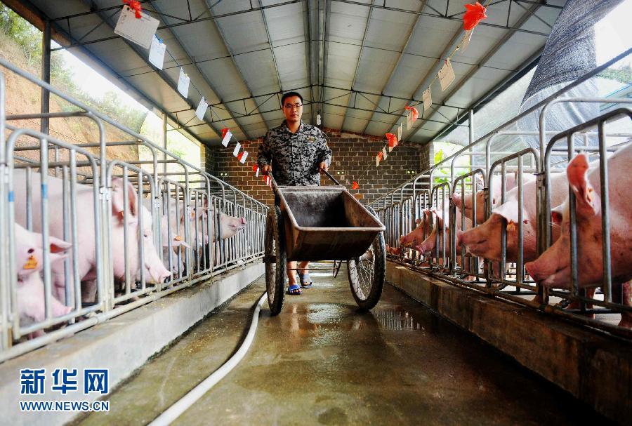 广西大学生回村养猪养鱼年入百万