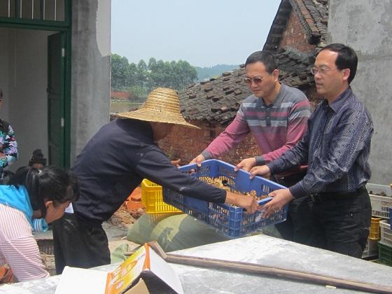 广西北海合浦种苗培训到村到户 政府企业携手扶贫