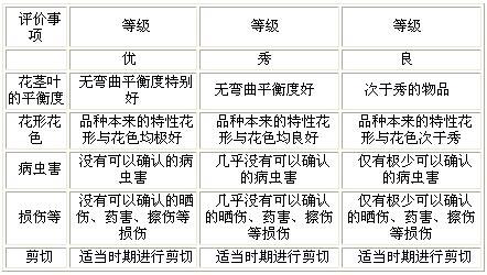 日本满天星相关标准