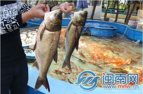 """福建漳州动物园数千条观赏鱼""""失踪"""" 湖底捞出死鱼"""