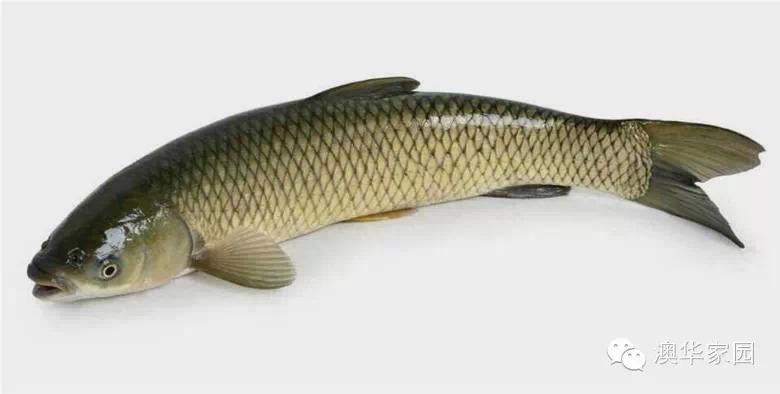 【Beplay官网版微创新】小龙虾和草鱼轮养可增加一季收入