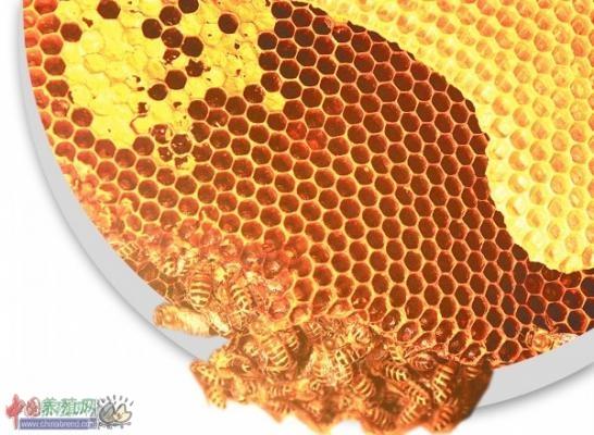 蜂蜜木箱子设计图展示