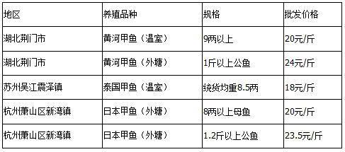 2015年3月24日外塘甲鱼塘口收购价格