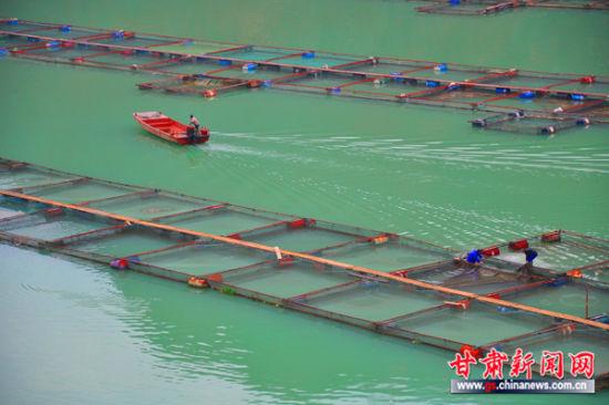 甘肃陇南文县抓新品种、推广新技术发展渔业