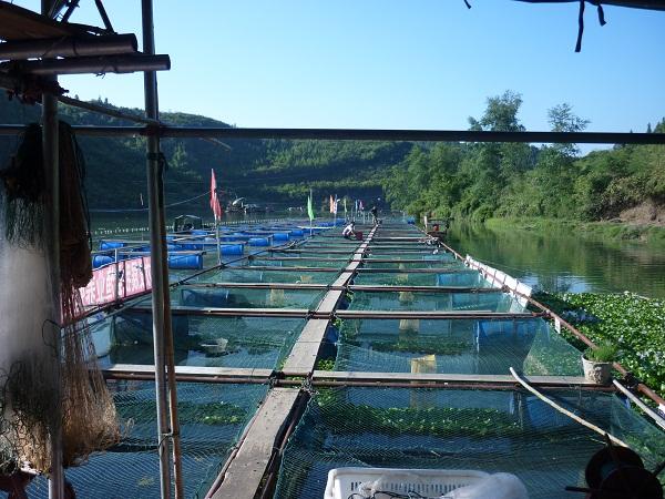 湖南怀化会同:养鱼合作社引导专业捕捞渔民转产转业