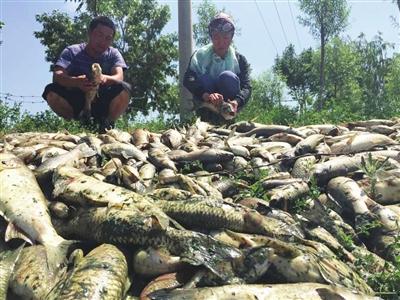 宁夏吴忠市:鱼儿大批死亡,到底因为啥?