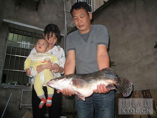 """湖南湘潭一男子钓起六公斤多""""鳜鱼王"""""""