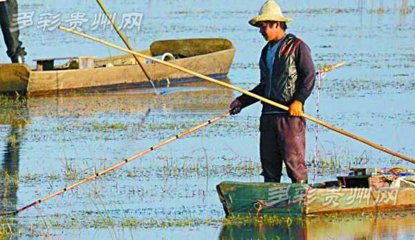 贵州村民在草海非法电鱼 电网过处黑颈鹤不敢落脚
