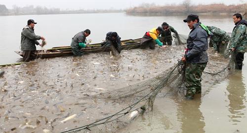 湖北湖南江西淡水鱼存量减少价格回升 养殖户放苗基本结束