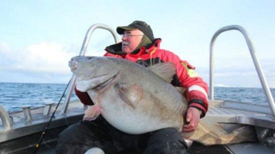 84斤!英国男子钓上大鳕鱼 将制成标本保存