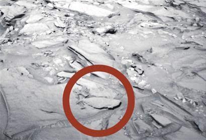 """NASA""""好奇""""号拍到火星有""""鱼"""""""