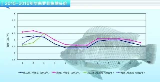 罗非鱼养殖户惜售喂料积极性不高,后市鱼价趋向上涨