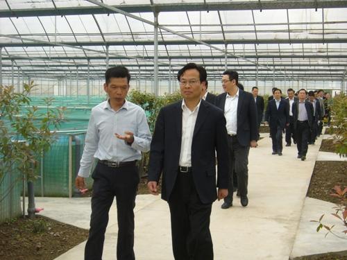 江苏张家港市领导走进示范户大棚 实地调研黄鳝工厂化养殖