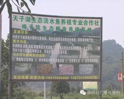 湖南邵阳张红桃的黄鳝养殖致富经