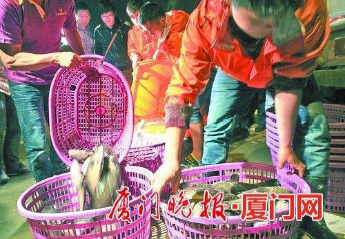 本土生产量和外来进口量都增加了 石斑鱼价格跌至两年来最低