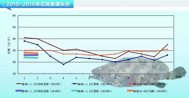 春节过后石斑鱼价格回落明显,整体价格偏低
