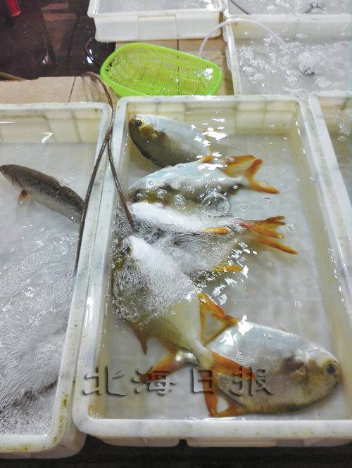 广西北海:深海网箱成为金鲳鱼温暖的家