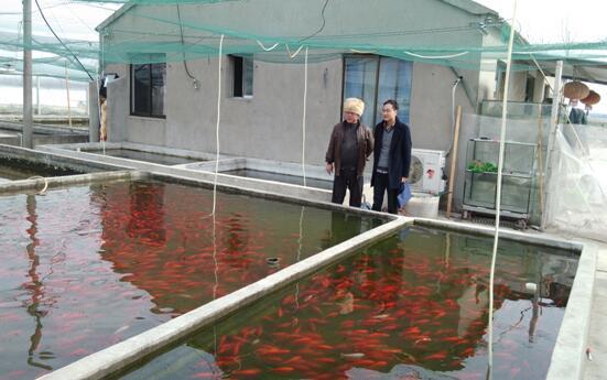 江苏镇江丹阳观赏鱼养殖异军突起