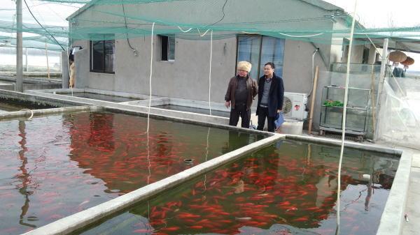 江苏镇江丹阳市观赏鱼养殖异军突起