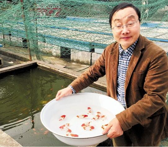"""浙江绍兴""""鱼痴""""专注观赏鱼养殖:我的金鱼,万里挑一"""
